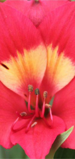 Intenze-Pink